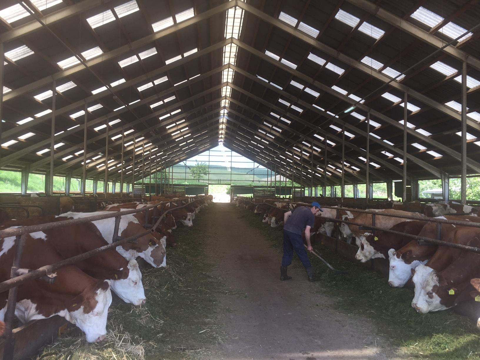 Romania -dairy farm for sale.......ref R06