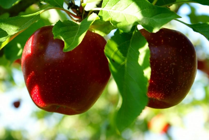 RUSSIA - ORCHARDS FOR SALE - REF: RU19