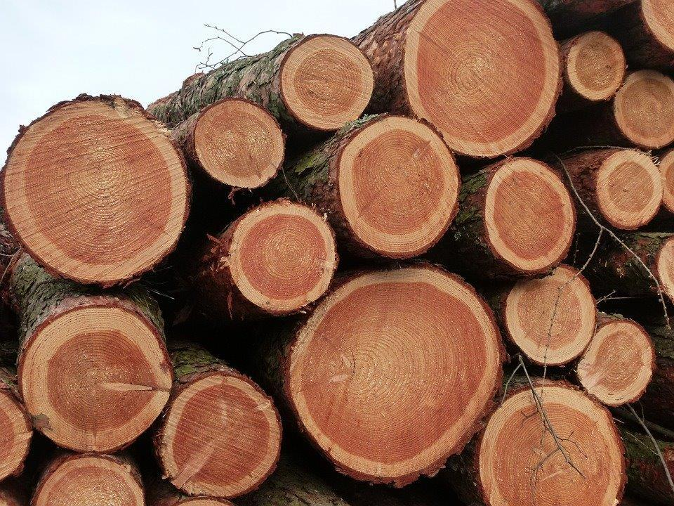 Russia - forestry opportunity  REF: RU18