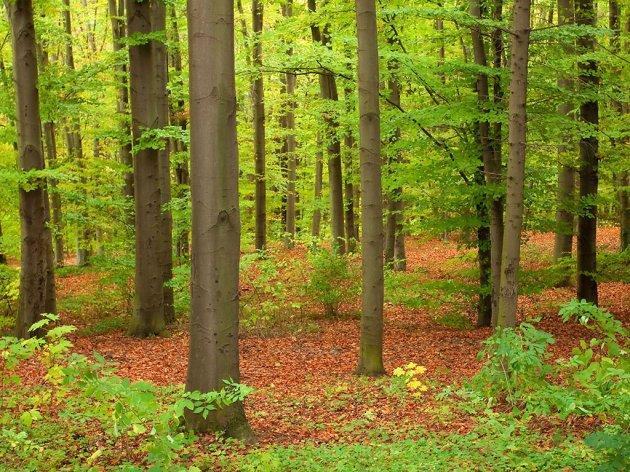 SERBIA - WOOD LAND FOR SALE....... REF SRB 7